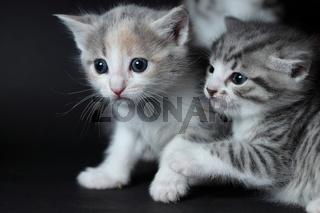 junge Katzen spielen