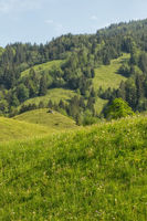 A green meadow, forest and blue sky