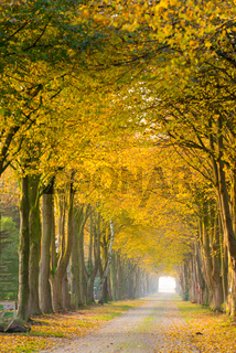forest away in autumn