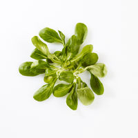 Produktaufnahme Feldsalat auf weißem Untergrund