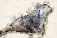 Watercolor Illustration Otter