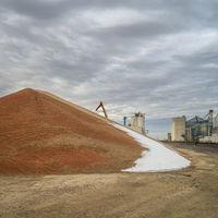 pile of sorghum grain in Kansas