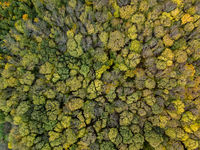 Aerial view from a drone above trees plantation on a summer sunny day.