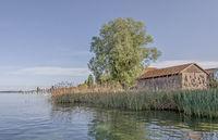 Uferzone Insel Reichenau am Bodensee