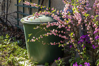 Regentonne mit blühenden Ziermandelstrauch, rain barrel with flowering almond