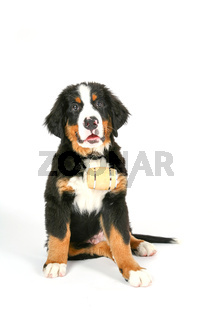 rescue dog with whiskey barrel