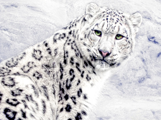 Schnee-Katze