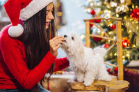On New Years Eve, a woman plays with a small dog.