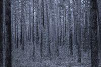 Dunkelblauer Wald