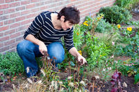 Woman gardening in the front garden of her house