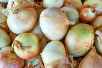 Fresh white onion at the market