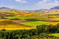 Landwirtschaftsfelder in Castilla La Mancha, Spanien