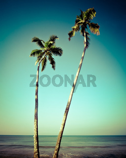 Beautiful tropical landscape with palm trees