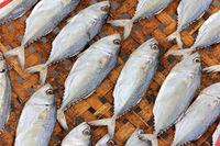 Close-up dried fish
