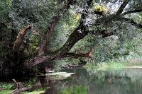 Taubergiessen Naturschutzgebiet am Altrhein
