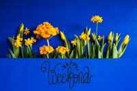 Yellow Spring Flowers, Tulip, Narcissus, Text Happy Weekend