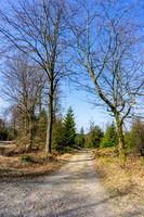 Auf dem Rothaarsteig unterwegs durch den Wald