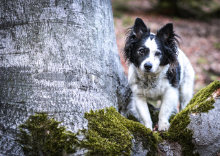 Discover the forest with your dog