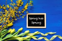 Spring Flowers Decoration, Branch, Blackboard, Text Spring Has Sprung