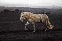 IS_Pferd_15.tif