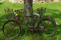 Altes verrostetes Fahrrad mit Blumen geschmückt an einen Baum gelehnt