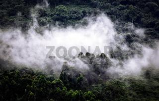 Nebel über dem Bwindi Impenetrable Nationalpark Uganda  | Fog above the Bwindi Impenetrable National Park Uganda