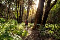 Hiker walking in the Australian bushland