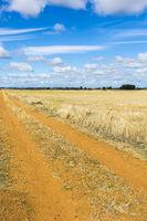 Wheat fields in Spain