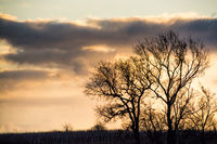 Silhouette of trees in a winter sunset in burgenland