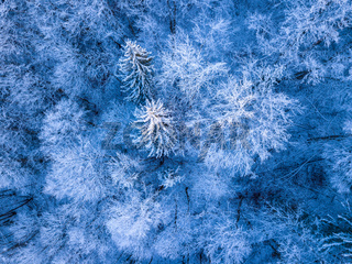 Hoarfrost and Snow in the Forest. Aerial View