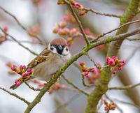 Sparrow bird sitting on the brach of a tree