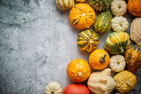 Beautiful colorful mini pumpkins on grac concrete background, holiday or autumn decoration
