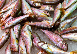Fresh red mullet fish at the seafood market