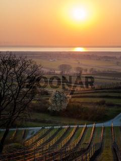 Sunrise at the vineyard hills of Burgenland