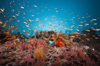 Buntes Korallenriff, Malediven