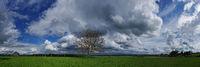 Wolkenformationen mit Baum