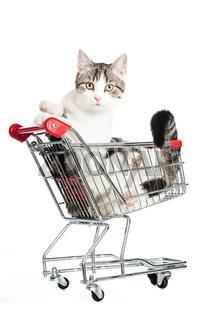 Katze im Einkaufswagen
