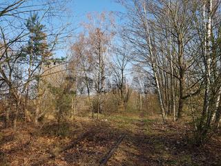 Stillgelegtes Abstellgleis, vom Wald überwachsen
