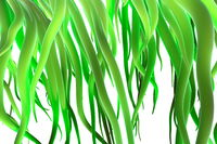 Fresh spring green grass isolated on white background. 3d illustration closeup
