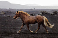IS_Pferd_13.tif