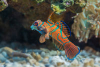 Saltwater fish with coral in the background