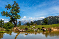 Indian Himalayan landscape in Himalayas