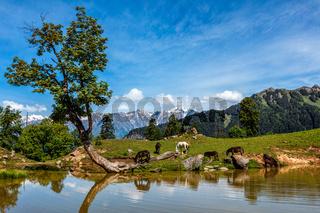 Indian Himalayan landscape in Himalayas