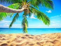 beach and coconut palm tree. Koh Tao