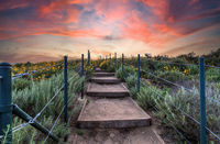 Sunset over Steps along the hiking trail above Dana Point Harbor