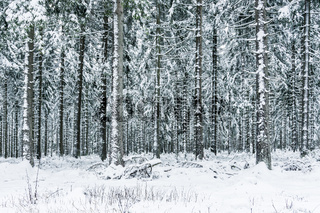 Thüringer Winterwald