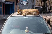 jodhpur dog sleeping