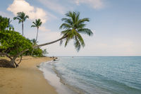 tropical beach with sea sand and palm trees
