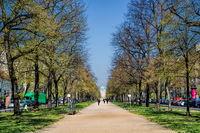 berlin, deutschland - 09.04.2019 - baumallee in der schloßstraße in berlin charlottenburg
