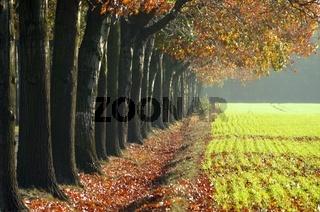 Allee im Herbst - avenue in fall 30
